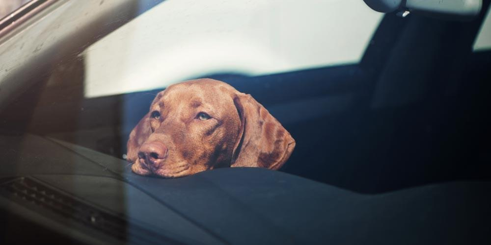 Pet Locked In A Vehicle